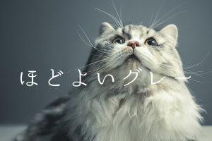 グレーな猫